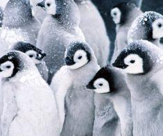 Цирк «Парад зверей на острове пингвинов»