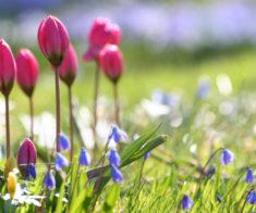 Концерт  «Симфония весны»