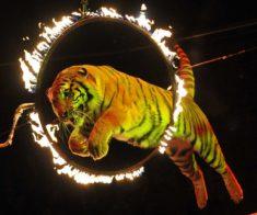 Цирковое шоу «ANTARES»