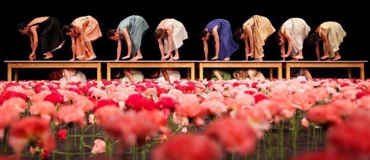 carnations-nelken