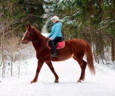 Где покататься на лошадях в Астане?