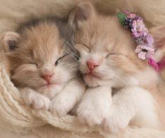 Выставка кошек «TOP CAT Final Kazakhstan»