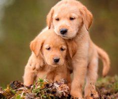 Выставка собак или куда сходить на этих выходных, 3-4 августа