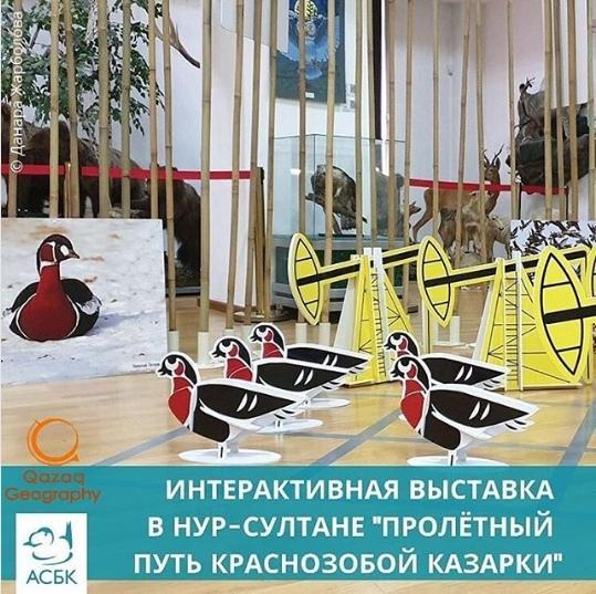 Выставка «Пролётный путь краснозобой казарки»