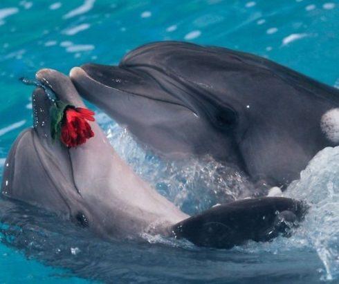 Шоу Дельфинов и морских котиков в Астане