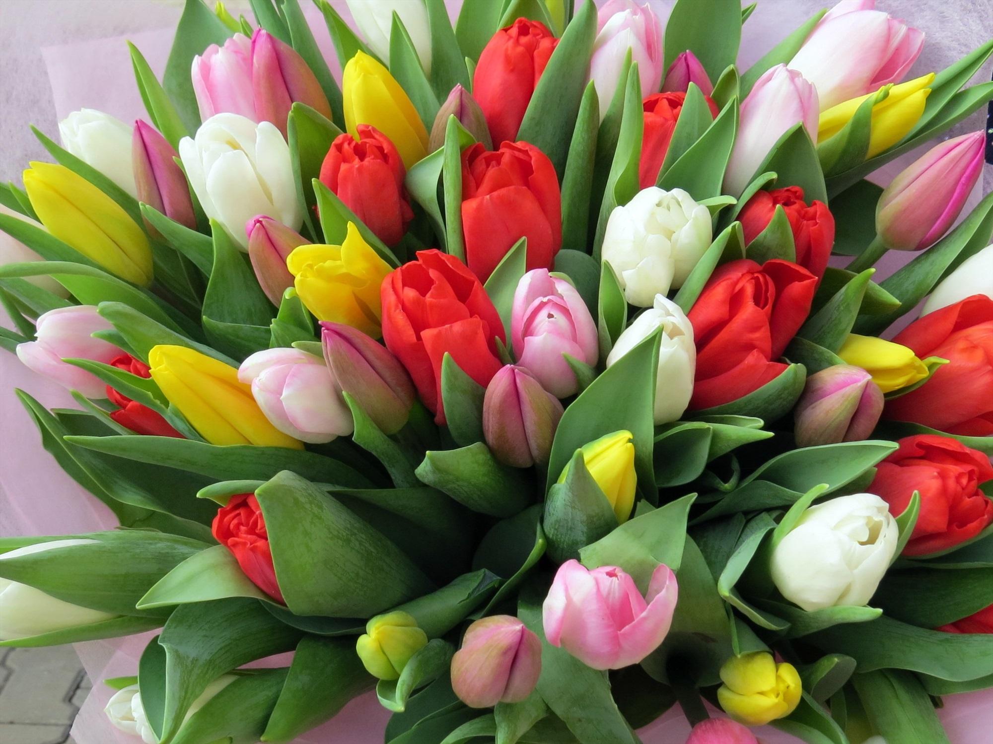 Открытки тюльпанов на 8 марта фото, картинки аватарку