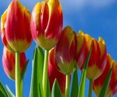 Международный OPEN FEST «Путь тюльпана»